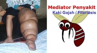 Obat Untuk Penyakit Filariasis